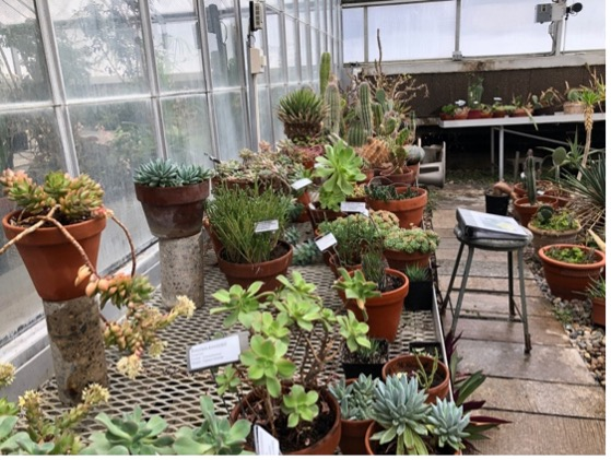 Small succulents in pots in a greenhouse