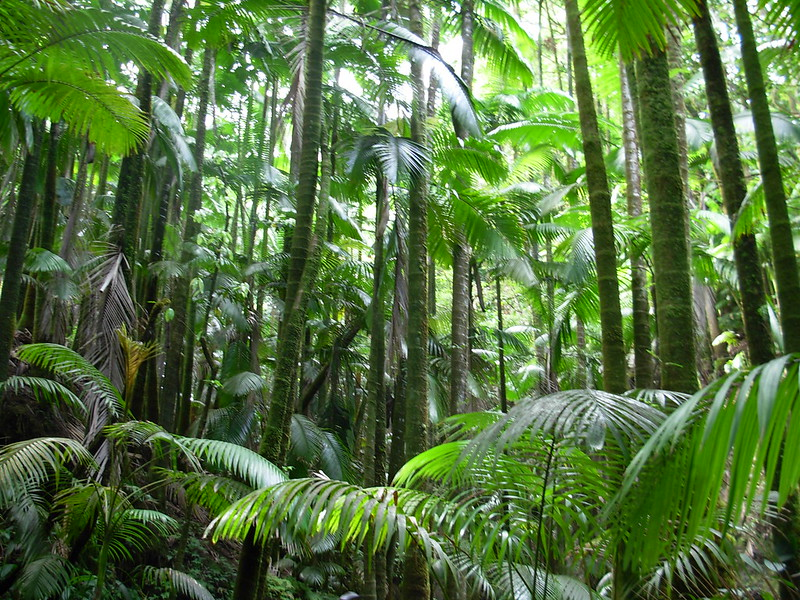 A tropical forest