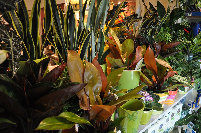 A collection of colorful leafy plants in green and multicolored pots inside.