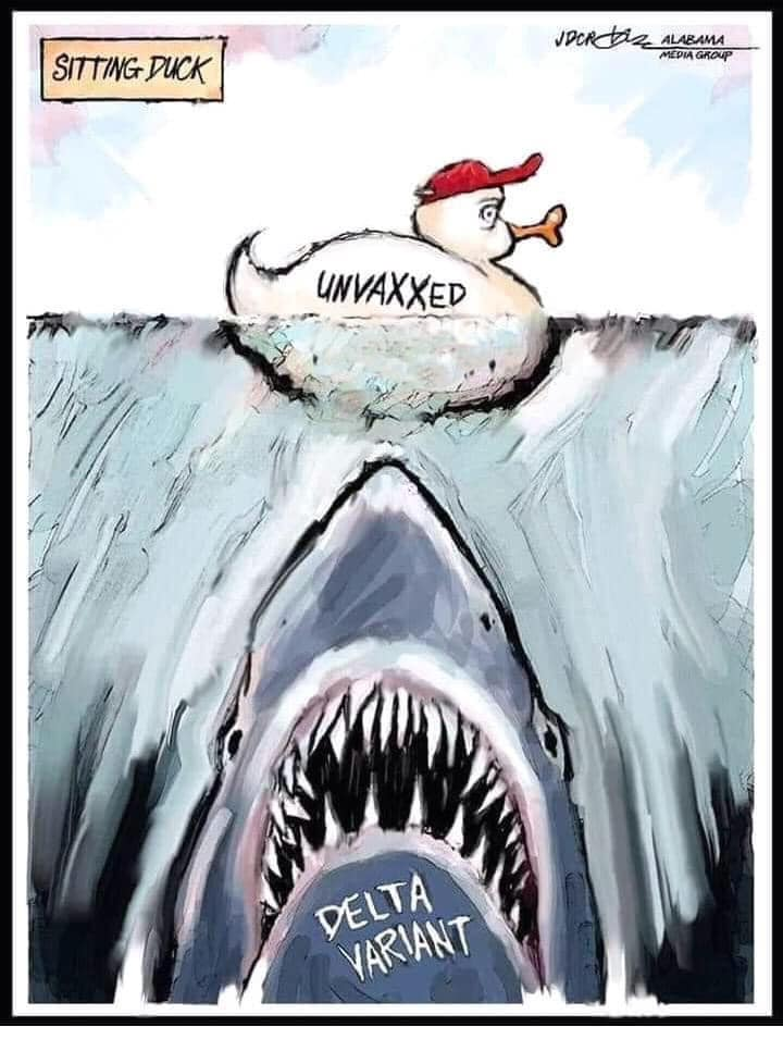 """A comic showing a duck wearing a red baseball cap labeled """"unvaxxed"""" swimming unware while a shark labeled """"Delta Variant"""" swims toward it from under the water."""